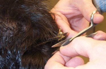 Understanding Hair Testing for Drug Analysis