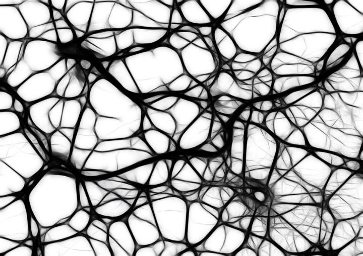 Glia Cells in Brain Found to Birth Neurons