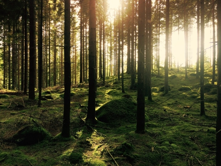 """""""Let's Move to the Countryside!"""": How Nature Could Promote a Healthy Brain"""
