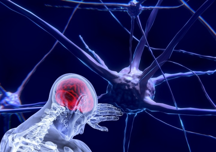 Our Brains and Information: How We Learn and Why