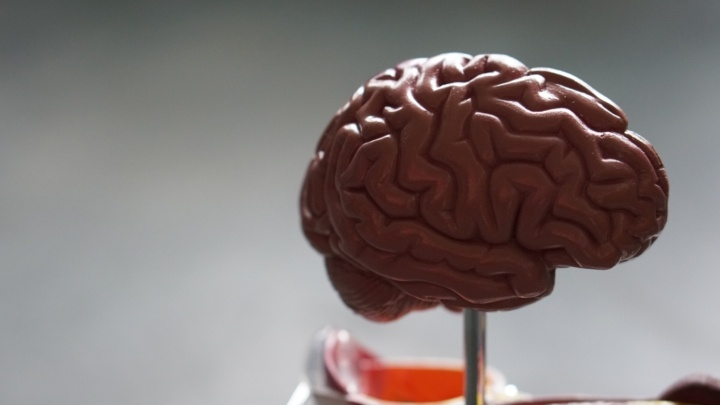 Stimulating the Hippocampus Could Alter Negative Memories for the Better