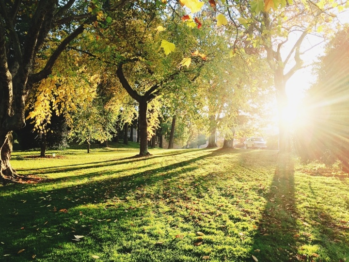 How Parks with Vegetation Increase Overall Mood